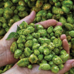 Birra artigianale: si punta ad una filiera del luppolo tutta italiana