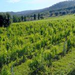Lutto nel mondo del vino: si è spento Gianfranco Soldera