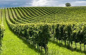 Nuove tecnologie e agricoltura, una squadra da 400 milioni di euro