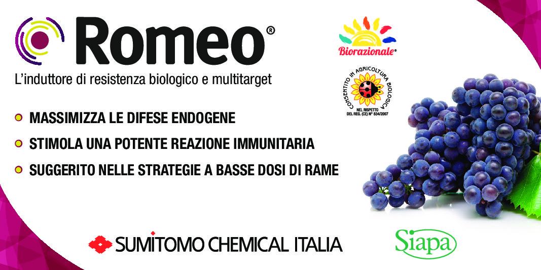 Romeo®, l'agrofarmaco biologico e multitarget di Sumitomo