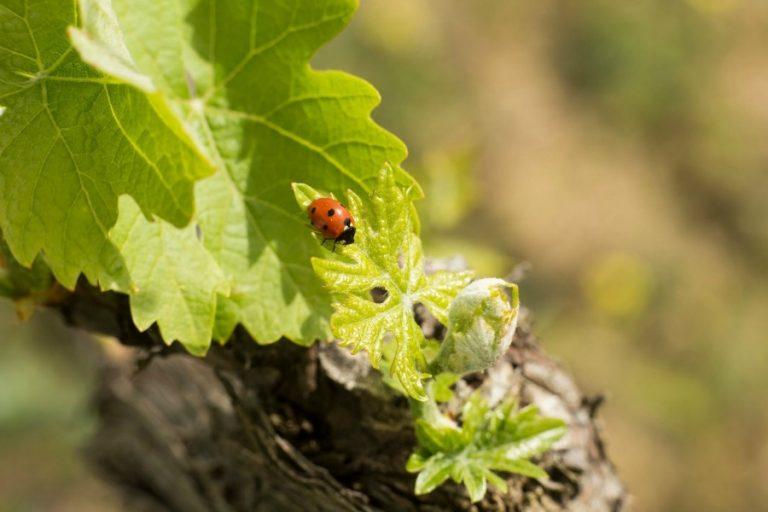 Vini naturali: sostenibilità e impatto ambientale degli eventi.