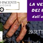 Franco Pacenti – Canalicchio: Cantine Aperte in Vendemmia