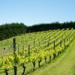 Produzione di vino europea in calo del 15 % nel 2019