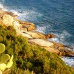 Nesos: il vino marino realizzato all'isola d'Elba