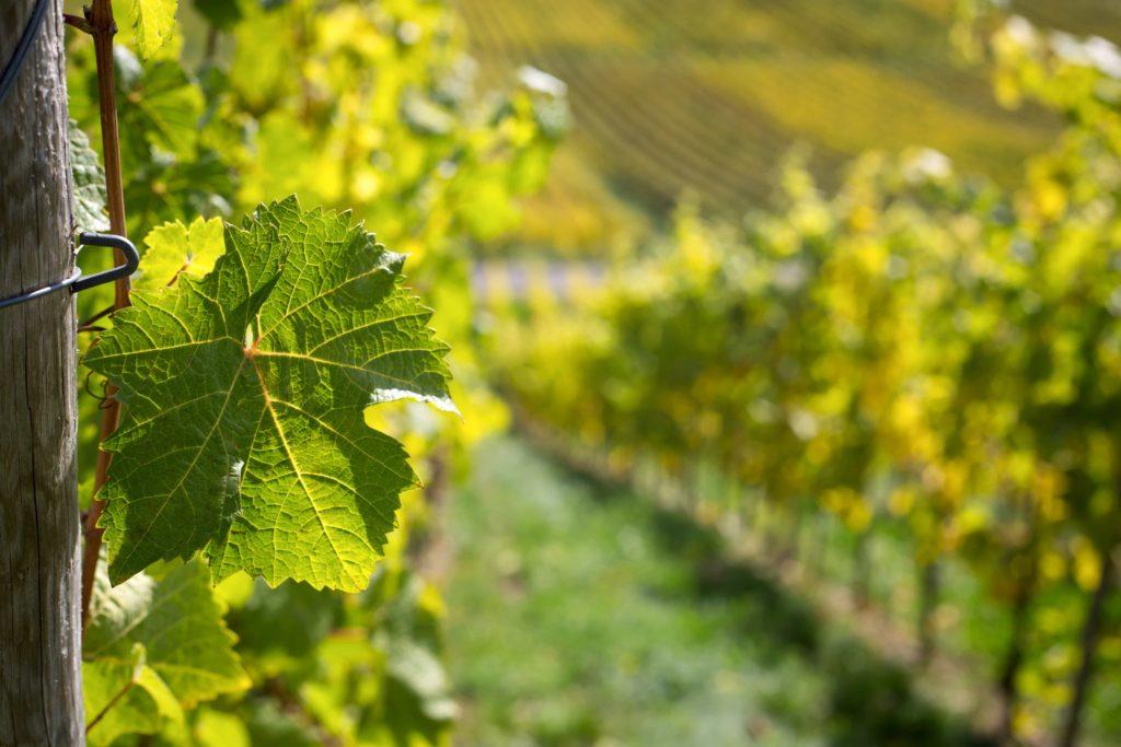mercato vini vignaioli indipendenti 2021