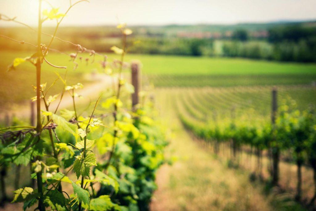 produttori vinicoli chiedono sostegni