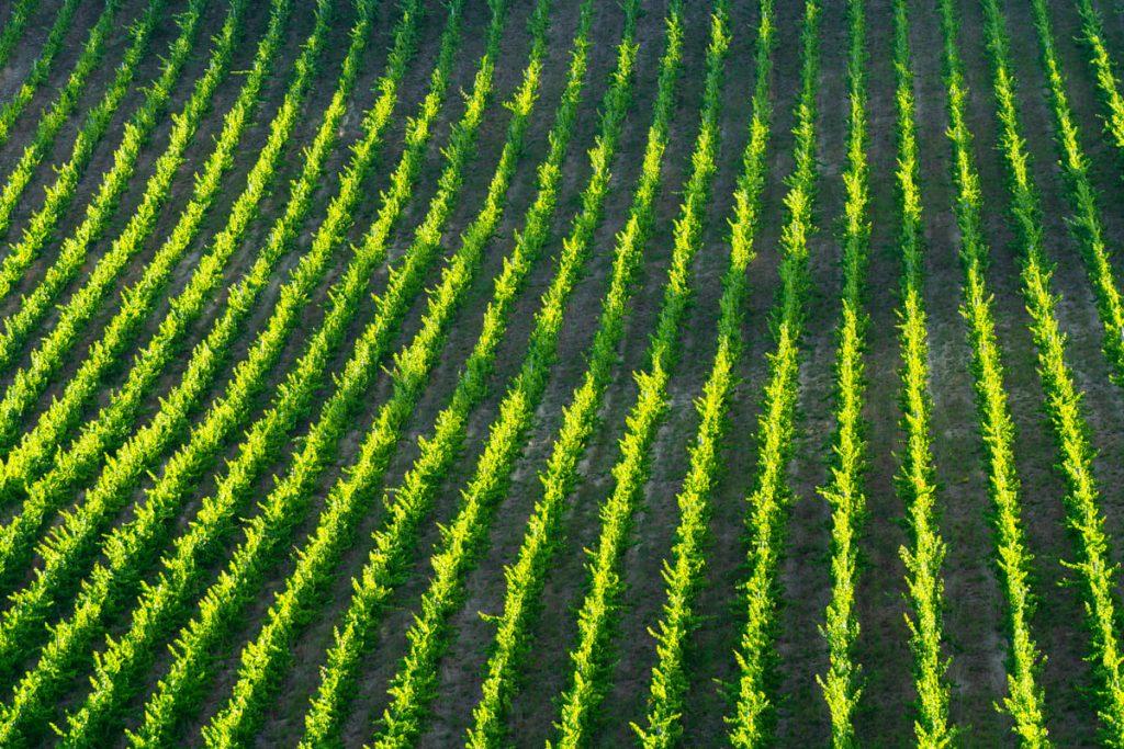 vino transizione ecologica