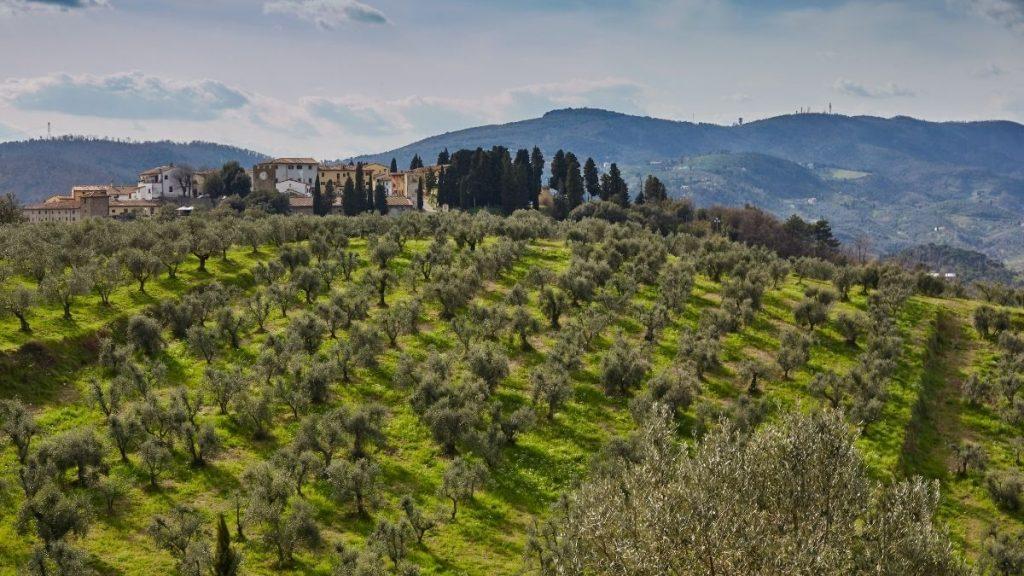 olio evo Umbria